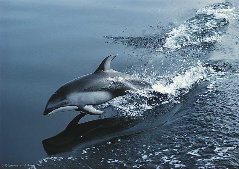 Canadian Gulf Islands Fair Winds Yacht Charter